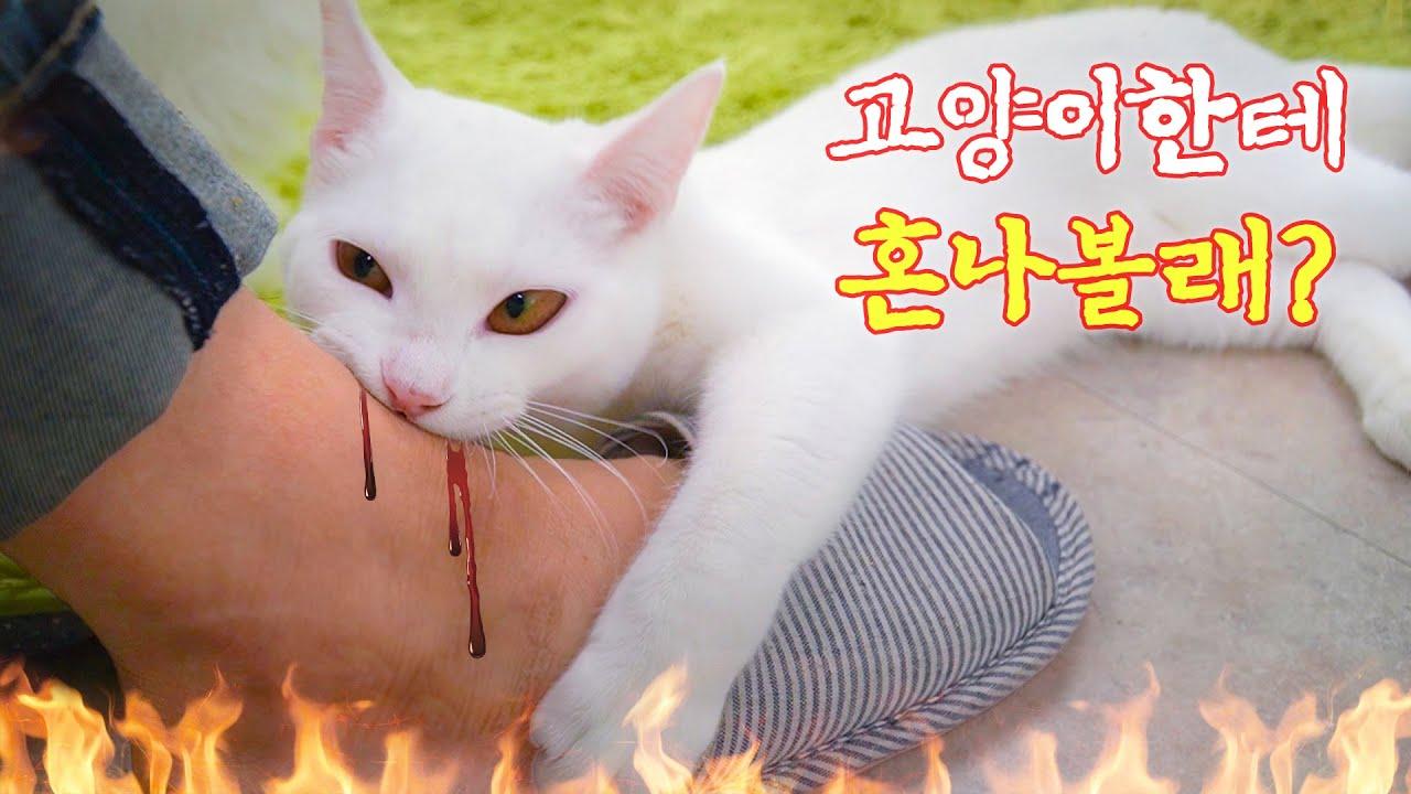 고양이는왜 사람을 물까요? | 고양이산책