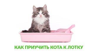 Как приучить кота к лотку. Ветеринарная клиника Био-Вет.