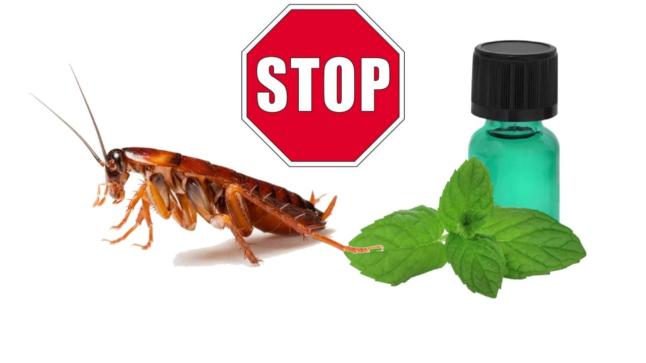 what is good to kill roaches