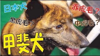 番組提供:ペットライン株式会社(http://www.petline.co.jp/) 今まで...