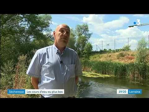 Sécheresse : alerte renforcée de niveau 2 sur 3 pour la Meurthe-et-Moselle - - France 3 Grand Est