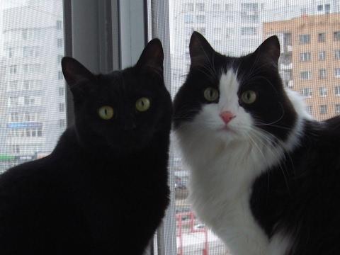 Выяснение отношений кота и кошки