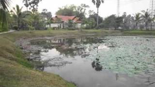 Lily Pond at Siem Reap Hotel Grounds