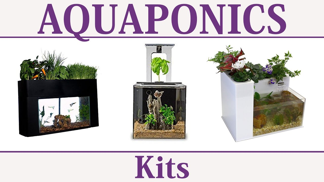 aquaponics systems u0026 kits youtube