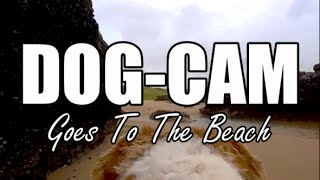 EXCITABLE DOG AT THE BEACH | Dogs Eye View
