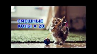 Приколы с кошками и котами #20. Подборка смешных и интересных видео с котиками и кошечками 2017