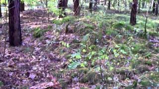 Лес, грибы и Garmin Etrex Legend GPS навигатор