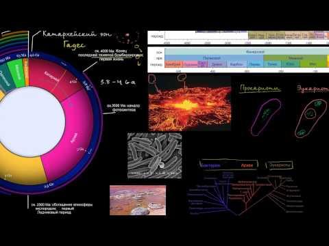 Иммунная система Википедия
