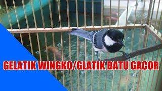 Download lagu NON STOP 2 JAM SUARA GELATIK WINGKO GELATIK BATU GACOR MP3
