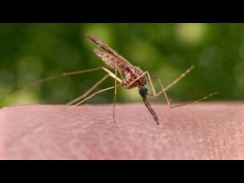 Mosquitoes less likely than people to spread disease via air travel