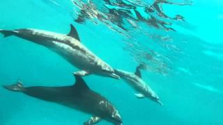Gambar cover Delfines en Cartagena