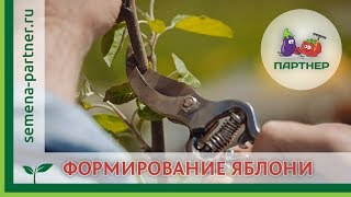 ФОРМИРУЕМ МОЛОДУЮ ЯБЛОНЮ