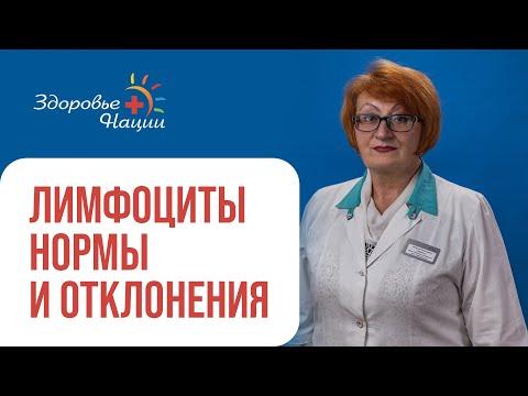 Нормы лимфоцитов в крови: у детей, у взрослых, во время беременности