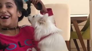 Dogs play with their owners - FUNNY Dog Want to Hug to the Owner