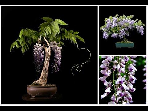 Купить комнатные горшечные растения и цветы с доставкой в