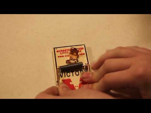 How To Set A Classical Mouse Trap RESHOOT
