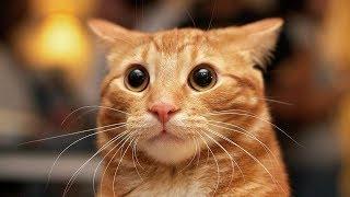 TOP 10 Funny cats videos   Funny cats vol 2