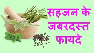 Moringa Health Benefits Hindi Drumstick Tree Health Benefits Hindi