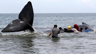 A Race to Save 10 Stranded Whales...