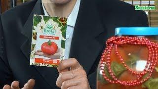 Самые урожайные высокорослые помидоры для теплиц. Наш опыт.