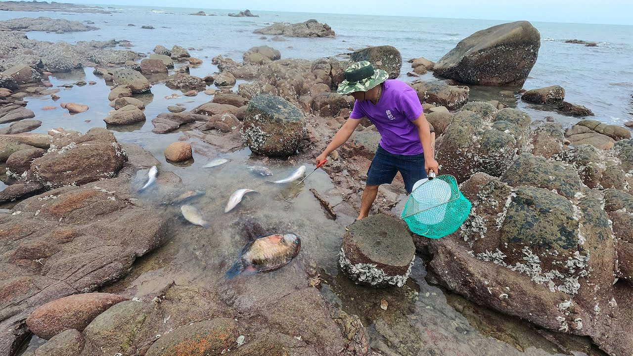 休渔期海里全是肥鱼,大风一过刮上来一群,阿彬只管挑大的捡