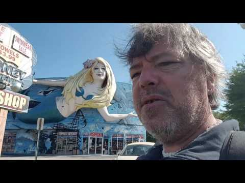 Daily vlog 05/25/16 gift shop roadside attractions alligators and chickens