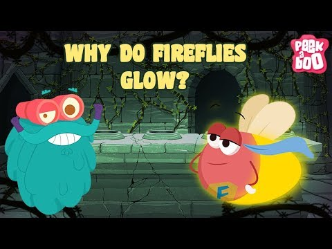 why do fireflies glow 2018-07-21 bioluminescence they have glowing butt which is filled with chemicals, which are activated by some enzymes in fireflies the chemical is luciferin and the enzyme is luciferase the enzyme catalyses the oxidation of luciferin.
