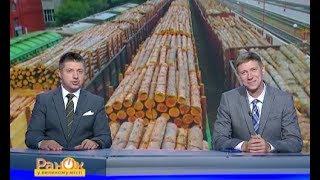 Украина является лидером по незаконному экспорту леса в ЕС