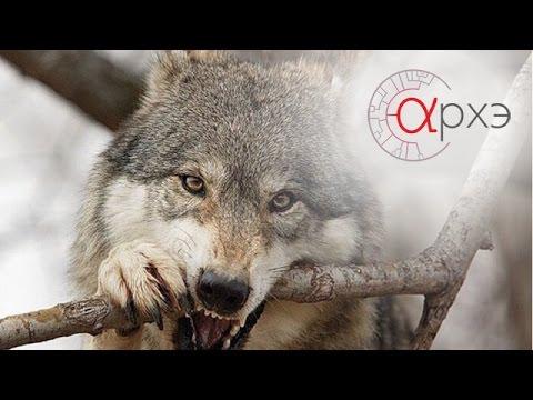 Неочевидное вероятное повелитель волков смотреть лнлайн