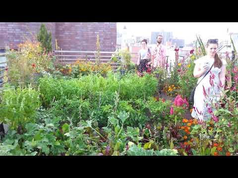 Sustainability tour umbrella houses roof Farm New York City 2017