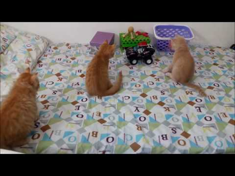 Cute Cat Mum & Kittens Get Stunned by RC Toy_Funny Wacky Moments-P3  🐹