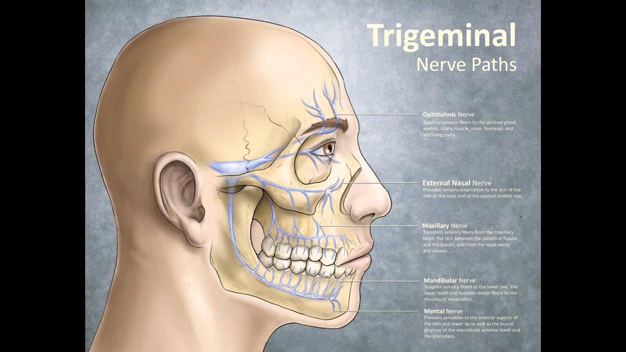 facial trigeminal nerve diagram bargman trailer connector wiring neuralgia face pain youtube