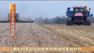 中国对进口大麦加征高额关税 澳洲要求世贸进行审查 - YouTube