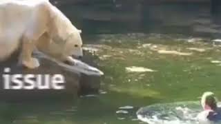 Women attakced by a polar bear in the zoo