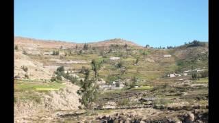 LOS VIÑALES DEL PERU solo PRIMICIA 2013