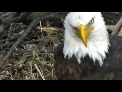 AEF DC EAGLE CAM:  03 FEB 2017 - Mr. President, Let Me Hear Your Voice