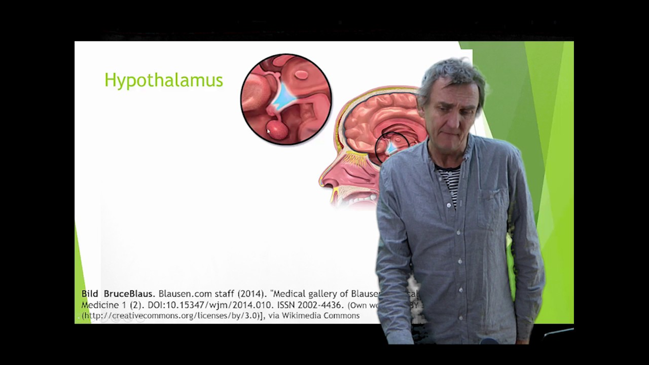 Nervsystemet del 8 ( Cerebellum Hypothalamus Thalamus)