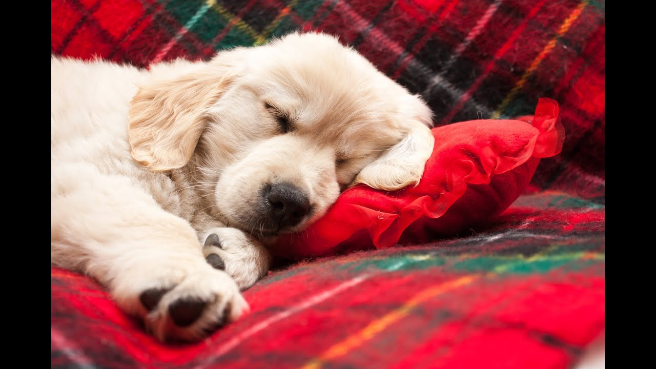 Music To Make Dogs Sleep