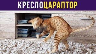 Приколы с котами. КРЕСЛОЦАРАПТОР | Мемозг #149