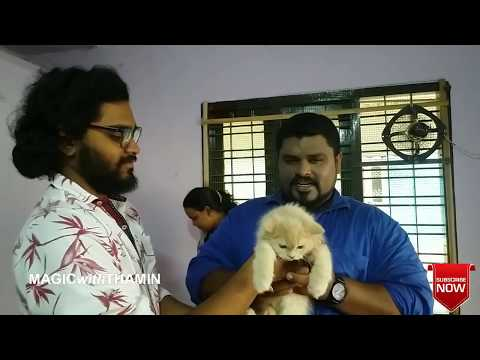 Pets   Dog   Persian Cat    Must Watch This Video   Tamil