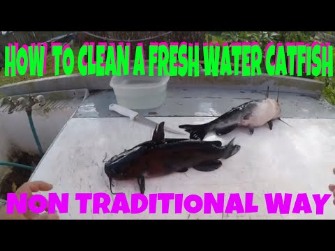 HOW TO CLEAN A FRESH WATER CATFISH