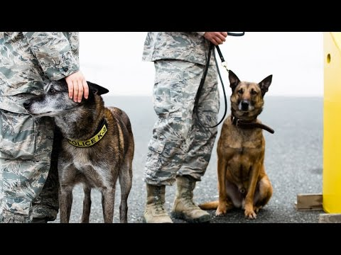 Can Your Dog Be Trained For Home Protection? Purple Heart Re