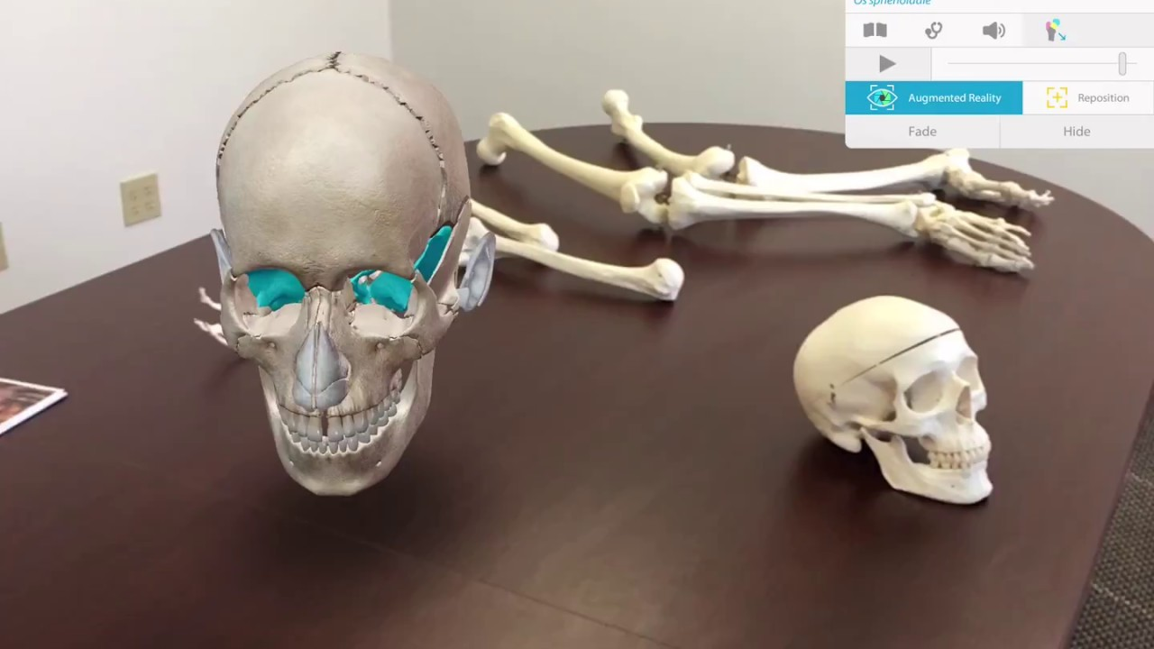 Augmented Reality In Human Anatomy Atlas 2018 For Mobile Visible