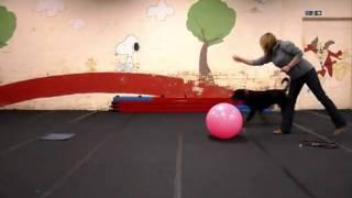 Waggawuffins Treibball Dogs - Diesel