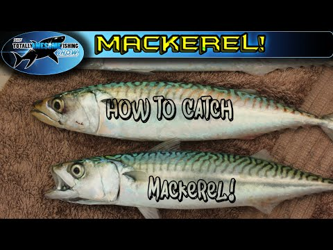 How To Catch Mackerel | TAFishing