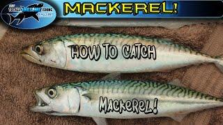 How to catch Mackerel | TAFishing