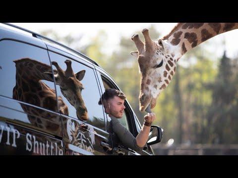 Safariland Stukenbrock Wieder Geoffnet Youtube