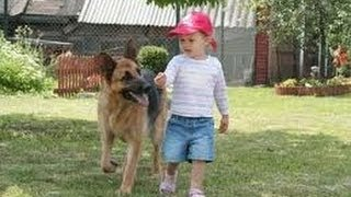 Funny Babies with Funny Dog German Shepherd Videos Funny Pranks Funniest Videos