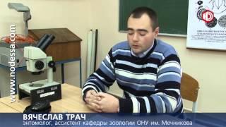 ДОЛГОНОСИК В РИСЕ(Крупа в супермаркете «Виртус» поражена насекомыми! Такое заключение дал ряд одесских экспертов относитель..., 2013-12-11T16:52:52.000Z)