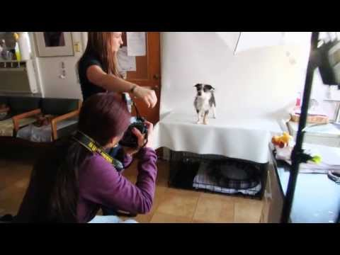 video:Positive Vista Photography & Art by Portia Shao - Photoshop Elements presents Furtography